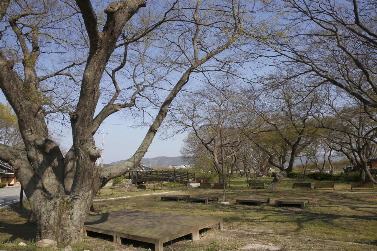 해보천을 따라 느티나무와 팽나무, 왕버들 수십 그루가 무리를 이루고 있는 모평마을 숲. 아름다운 숲 전국대회에서 공존상을 받았다.