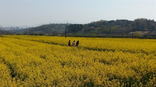 광주와 나주의 경계 광산구 본덕동 호가정으로 가는 길목에는 노란 물감을 흩뿌려놓은 듯한 유채꽃이 만발했다