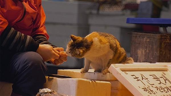 영화 <고양이 집사>의 한 장면.