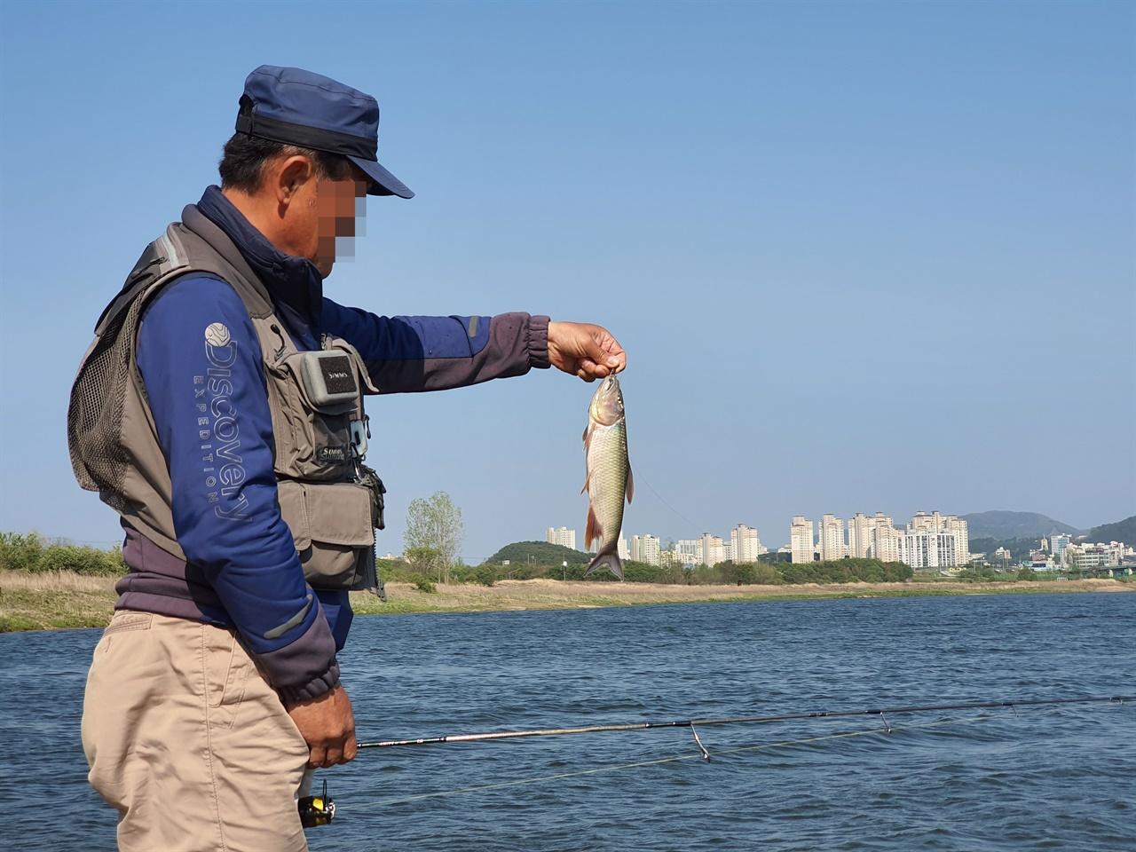 세종시에서 왔다는 낚시꾼이 끄리를 잡아냈다. 이 지역에서는 이 물고기를 '칠어'라고 부르기도 한다.