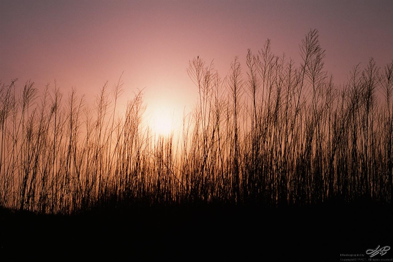 갈대와 석양 (RDP3) 평야지대를 지나는 만경강은 산간지방보다 저녁 빛이 진하다.