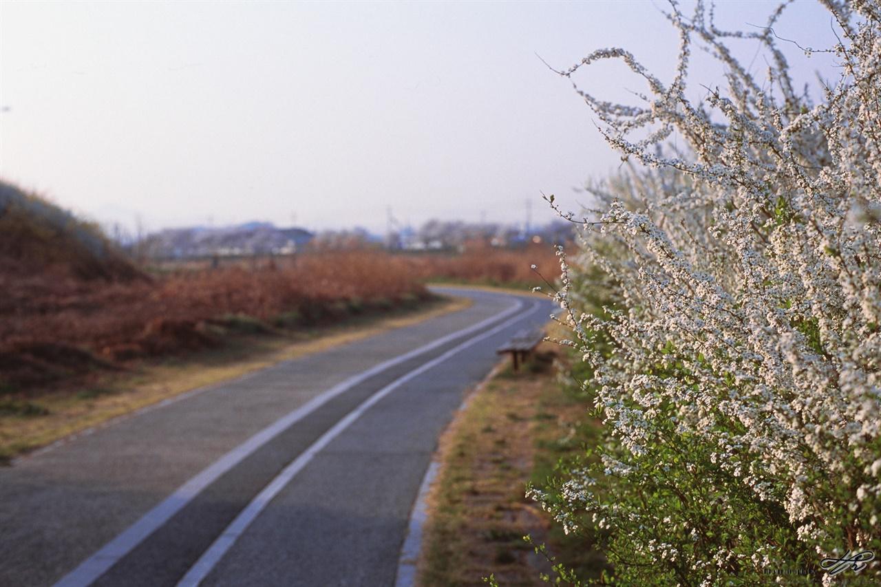 조팝나무꽃과 자전거길 (C200) 차량 및 보행자의 통행에 방해가 되지 않는 이른 아침의 천변길