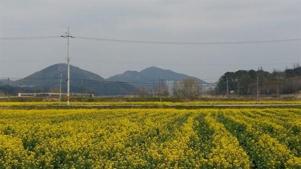 필문 이선제 선생의 부조묘와 괘고정수가 있는 광주광역시 남구 원산동 만산마을 입구에는 노란 유채꽃이 만발했다