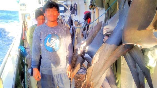 인도네시아 선원이 건조되는 상어지느러미와 함께 사진을 찍고 있다.