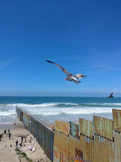 3160km에 달하는 멕시코와 미국을 가르는 국경은 서쪽 끝에서 태평양과 만난다. 해안으로부터 100여 미터 더 국경이 이어진다. 오직 새들만이 자유롭게 오고 간다.