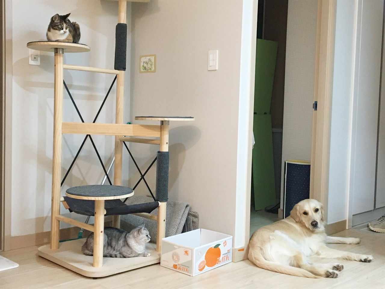 각자 쉬고 있는 개와 고양이들