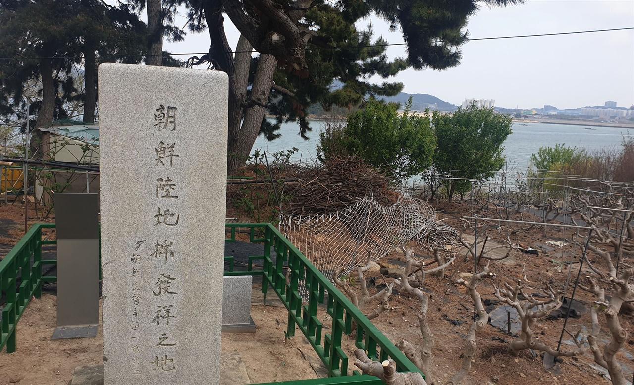 고하도에 세워져 있는 조선육지면 발상지비. 육지면이 1904년 처음 재배된 사실을 기념해 세워졌다.