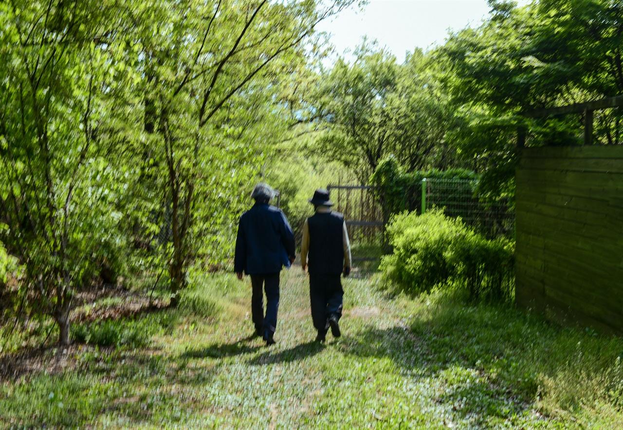 숲을 걷다