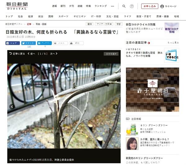 일본 교토의 윤동주 시인 기념비 앞에 심은 무궁화나무 훼손을 보도하는 <아사히신문> 갈무리.