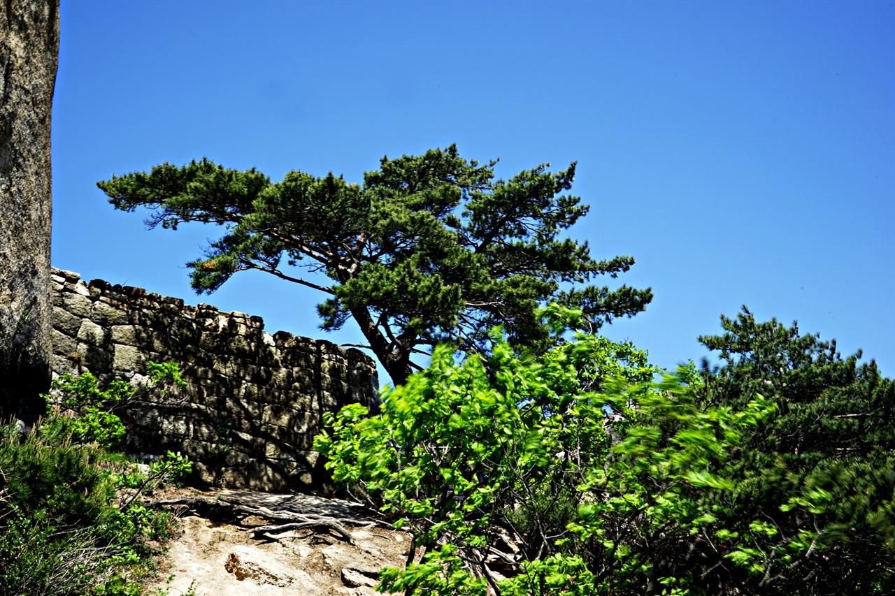 문수봉에서 만난 봄바람은 사람을 날려버릴 듯 강했다. 나무들이 봄바람에 흔들리고 있다.