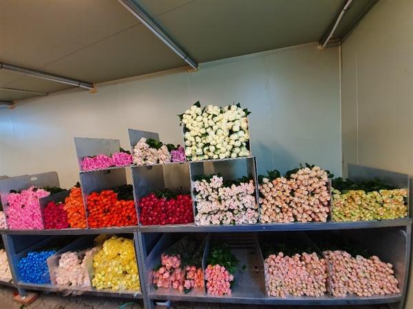 쌓여있는 장미의 재고모습 전년에 로즈데이에는 이미 소진되어야 할 장미의 재고가 팔리지 않아 창고에 쌓여 있다.
