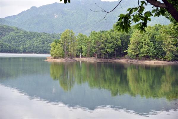 호수에 비친 숲