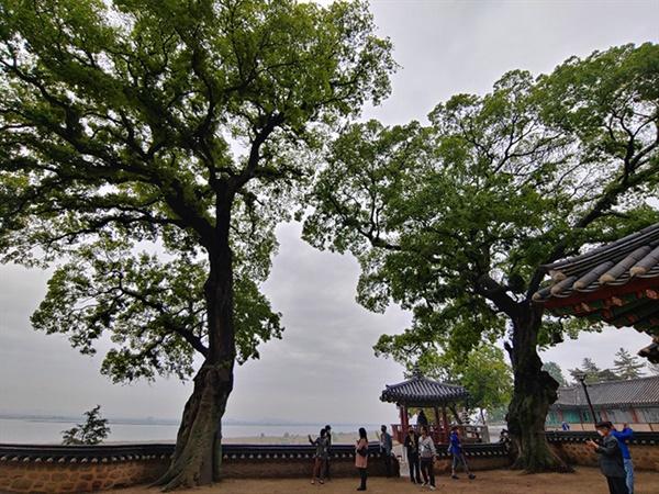 김제 망해사의 팽나무 두 그루는 각각 할아버지 나무와 할머니 나무라고 부른다고 했다.