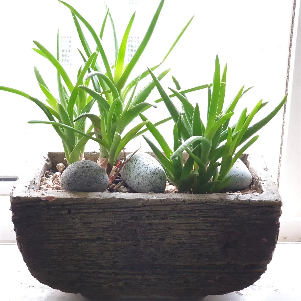 게발 선인장 꽃가게에서 만난 식물