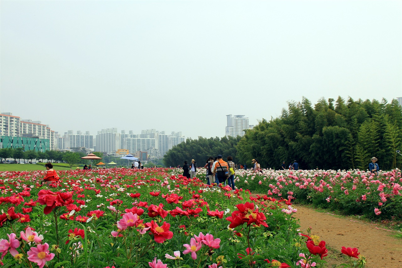 울산 태화강 국가정원 작약원 꽃밭단지 모습