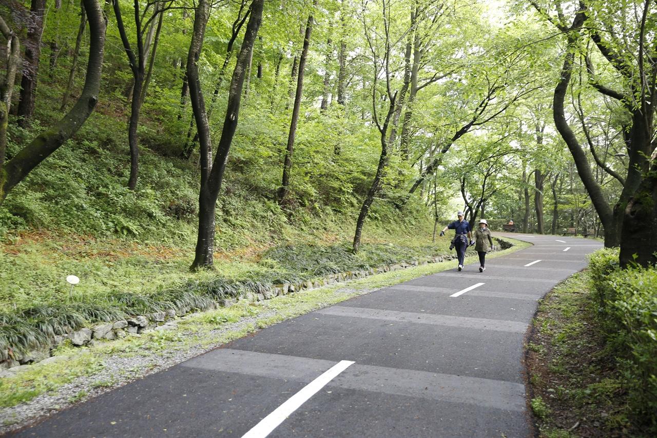 5·18 전남사적지로 지정돼 있는 화순 너릿재 옛길. 숲길에 편백나무와 벚나무, 단풍나무, 소나무가 빼곡해 한낮에도 햇볕이 들지 않는다. 사철 호젓한 숲길이다.