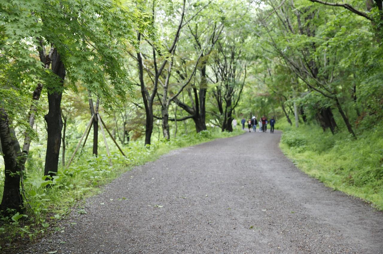 80년 5월의 참상을 다 지켜 본 화순 너릿재 옛길. 그날의 아픔을 고스란히 간직하고 있다. 지금은 호젓한 숲길로 여행객들의 발길을 유혹하고 있다.