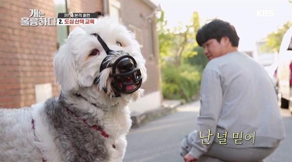18일 방송된 KBS 2TV <개는 훌륭하다>의 한 장면