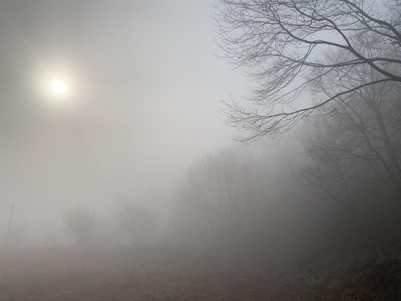 안개 짙은 산속 아침 풍경 아침에 눈을 떠보니 온세상이 하얬다. 마치 구름에 잠긴듯.