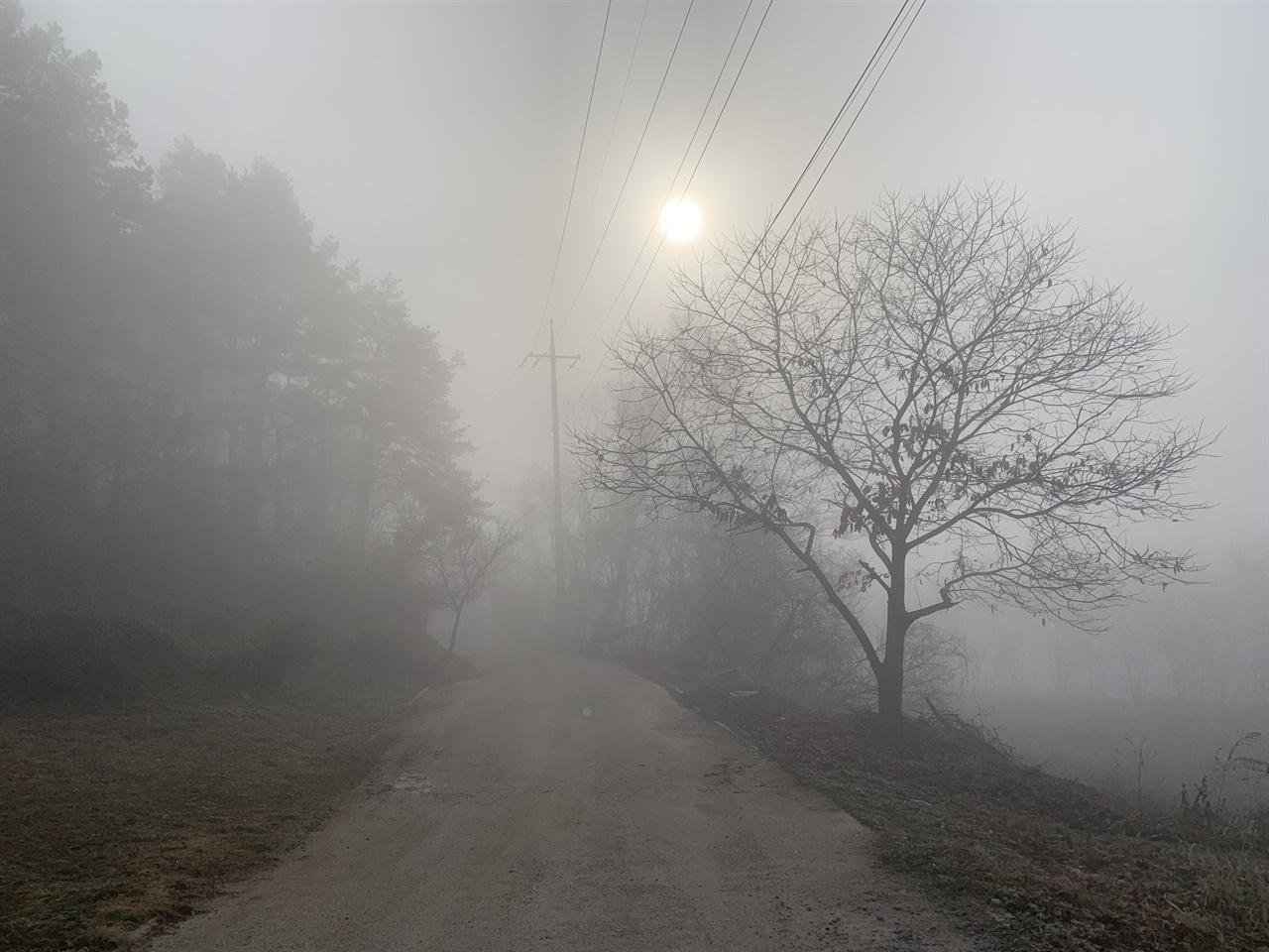 안개 짙은 숲속 아침 풍경 아침에 눈을 떠보니 온세상이 하얬다. 안개로 포샵처리가 된 아름다운 풍경에 홀린듯 무작적 안갯속을 걷기 시작했다.