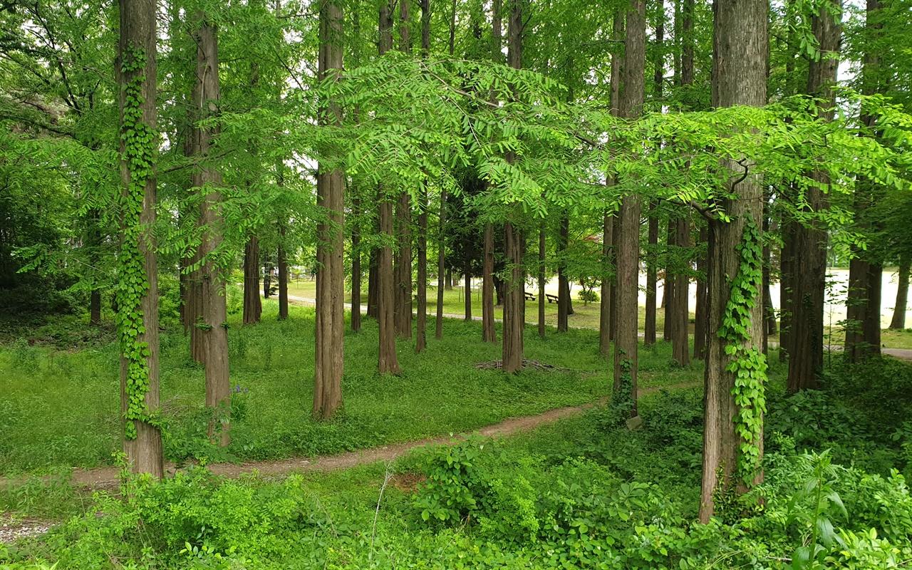 봄물이 잔뜩 오른 광주가톨릭 평생교육원의 편백숲. 수목원에 버금가는 숲에 서있는 것만으로도 힐링이 된다. 505보안부대를 보면서 느꼈던 가슴 찢어지는 고통도 치유해준다.