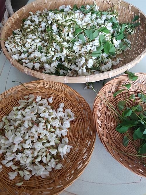 아카시 꽃 다듬기