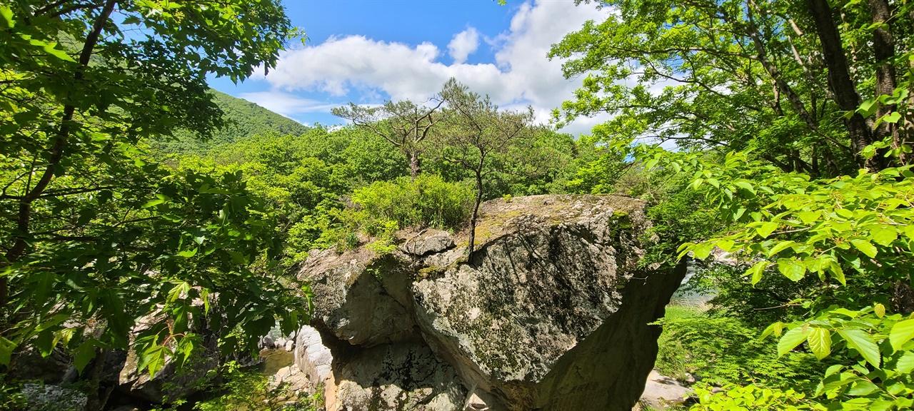 천송암(千松巖)   파회 가까운 길가에 천년송이 있다. 일지 대사가 소나무 가지를 꺾어 바위틈에 꽂았다고 한다.