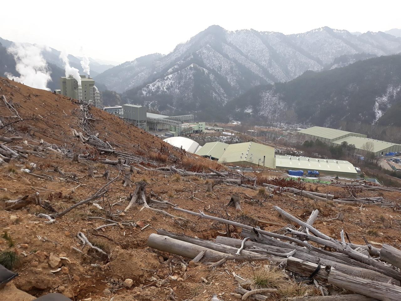 2018년 11월의 굴티공장(석포제련소 3공장). 공장 뒷산에 고사한 나무들이 버려져 있다. 굴티마을 주민이 떠난 자리에 3공장이 새로 들어섰다.