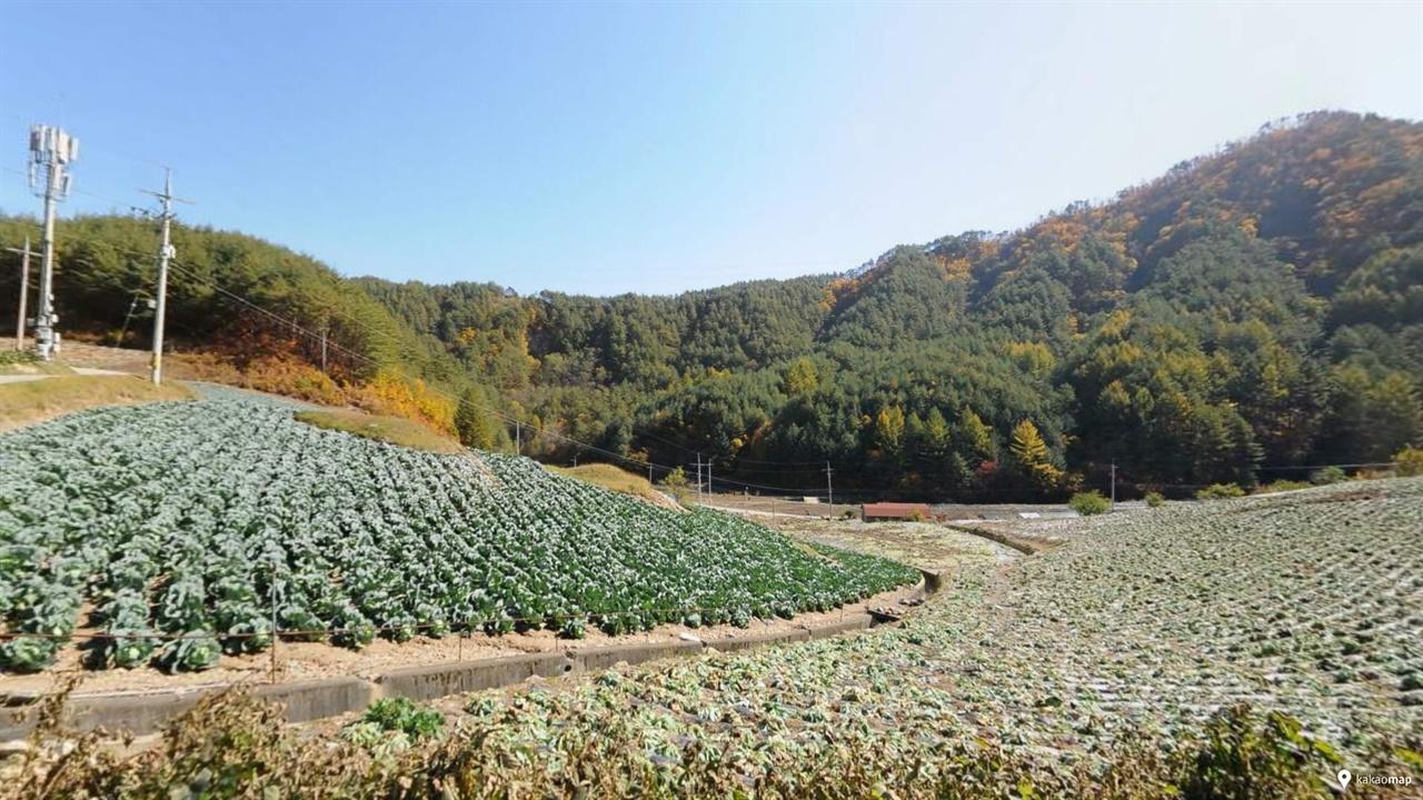 석포제련소 1공장 뒷산 너머에 있는 성황곡(성황골) 마을. 10여 가구가 배추, 무, 대추 등을 재배해서 높은 소득을 올리고 있다고 한다.