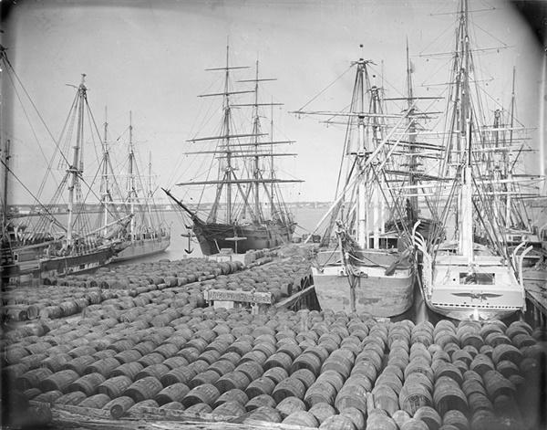 New Bedford 항 부두 1800년대 고래 기름통으로 가득 참