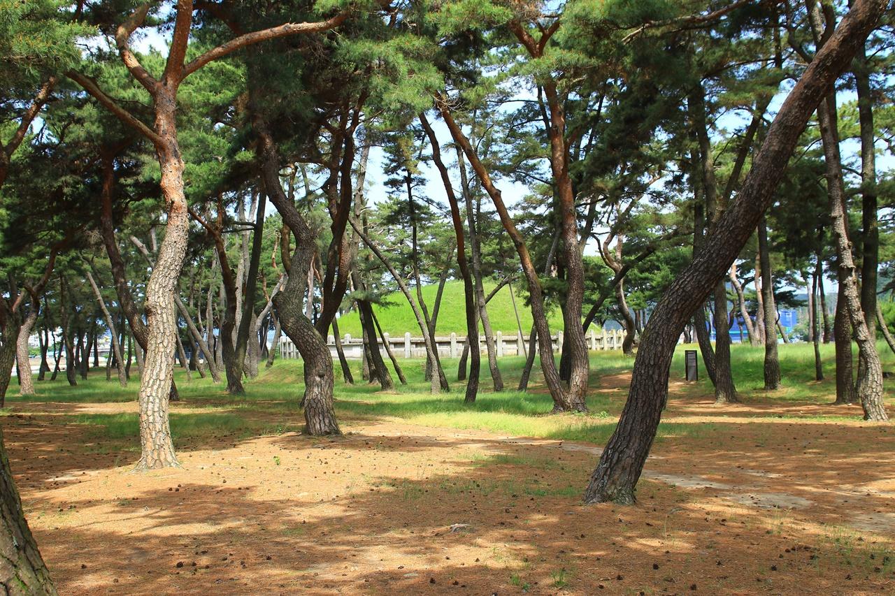 경주 보문관광단지 가는 길목에 있는 헌덕왕릉  모습