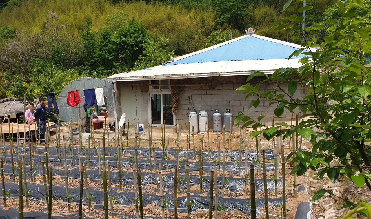 밭에 고추가 심어진 화순 증동마을의 농가 풍경. 한말 의병활동을 모의하고 결의했던 임노복의 집 앞이다.