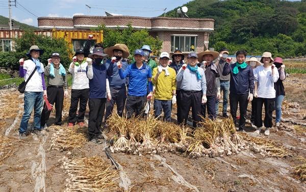 경남도청 도시계획과 직원들, 의령 농촌일손돕기.