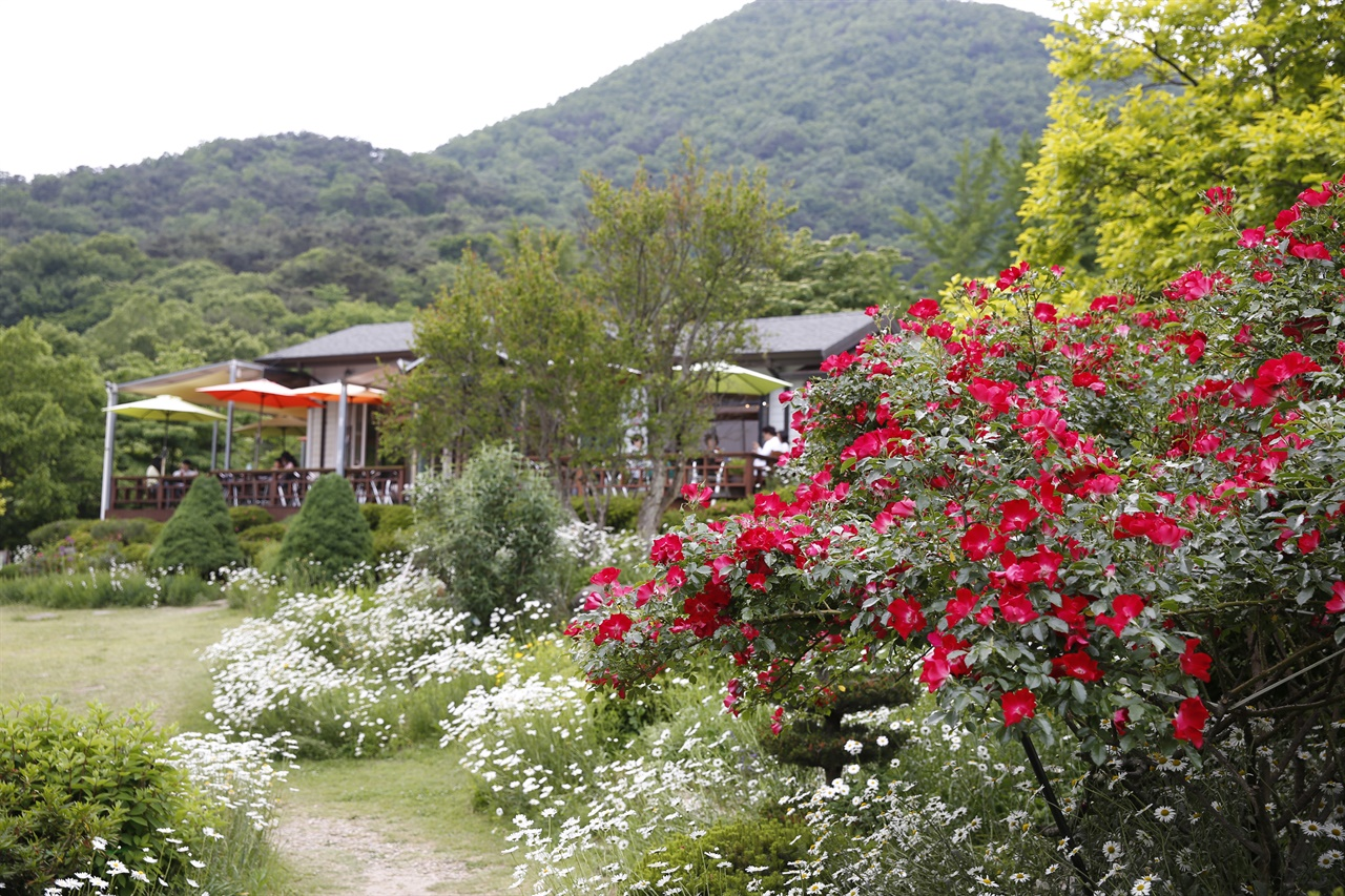 마가렛꽃과 넝쿨장미가 어우러진 하늘마루정원. 정원을 찾은 여행객들이 격이 다른 분위기에서 힐링을 하고 있다.