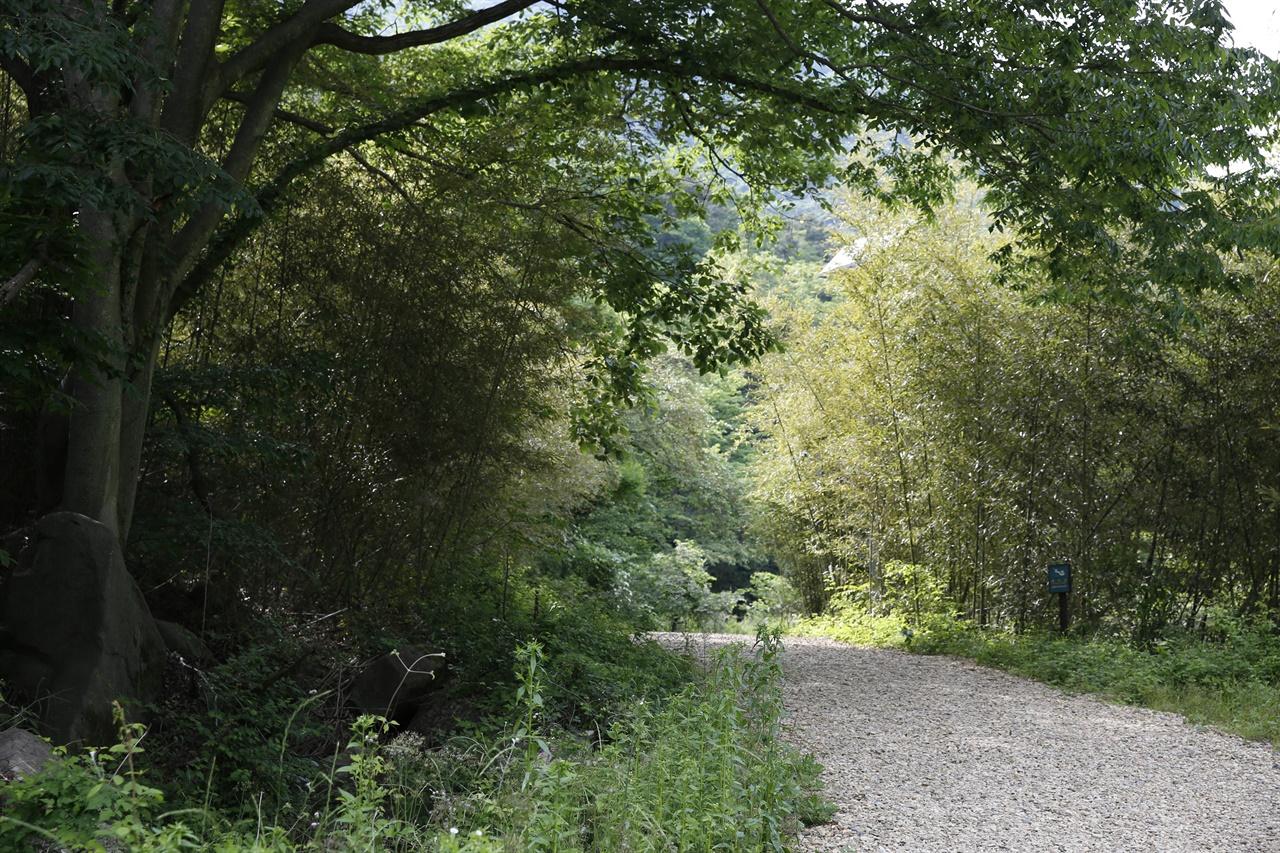 한재골 옛길에서 만나는 대숲길. 옛길은 험하지도 않아 싸목싸목 걷기에 좋다.