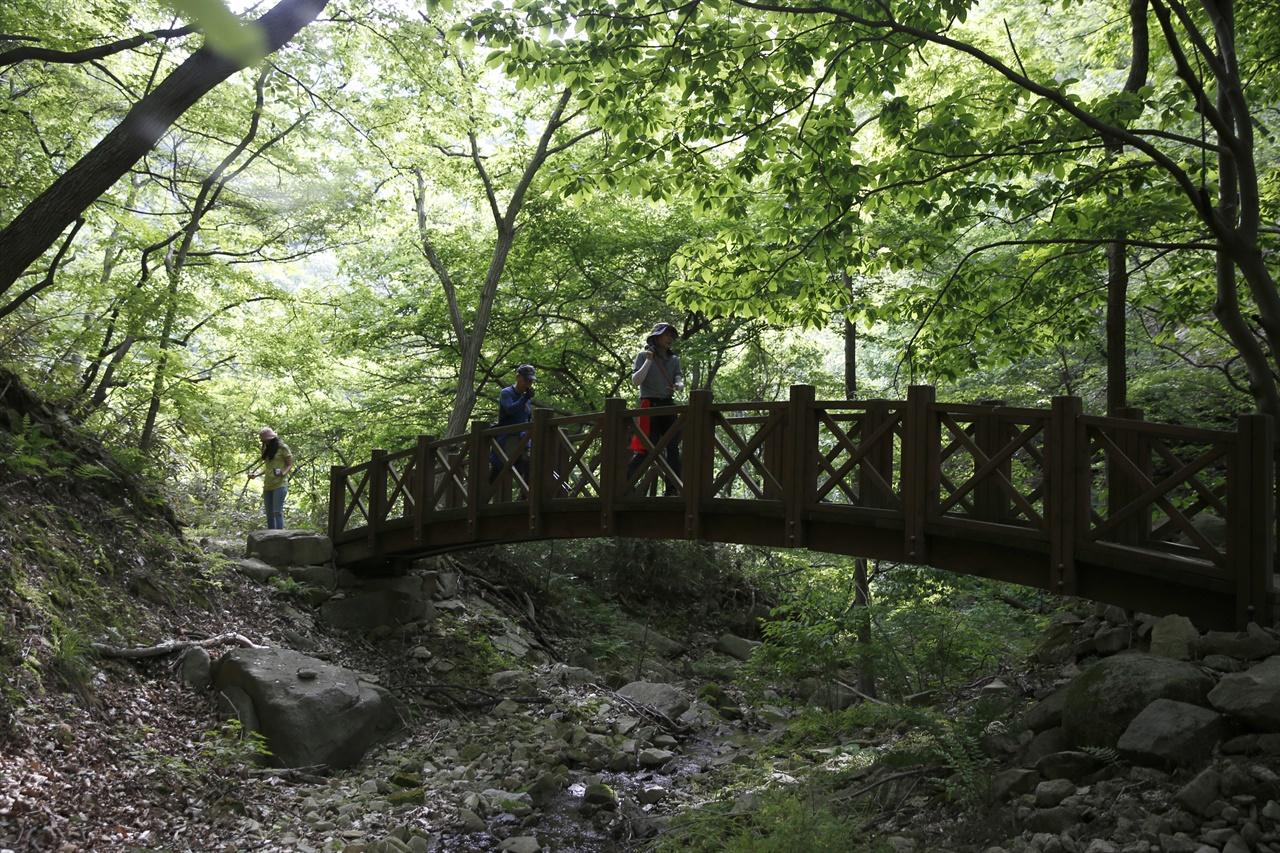 한재골 옛길에서 만나는 나무다리. 지난 5월 31일 옛길을 찾은 여행객들이 나무다리를 건너며 연녹색의 숲을 즐기고 있다.