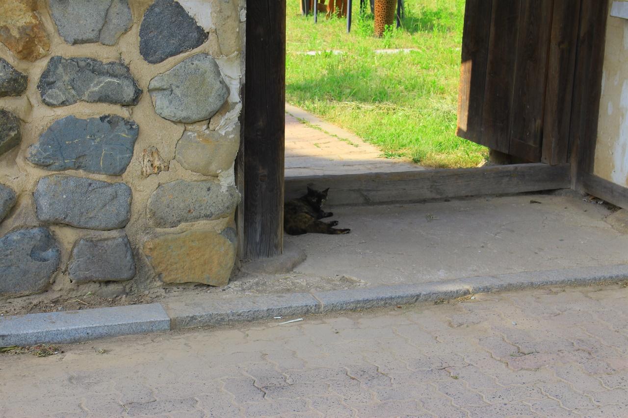 더위에 지친 길고양이가 남의 집 대문 앞에 앉아 더위를 식히는 모습