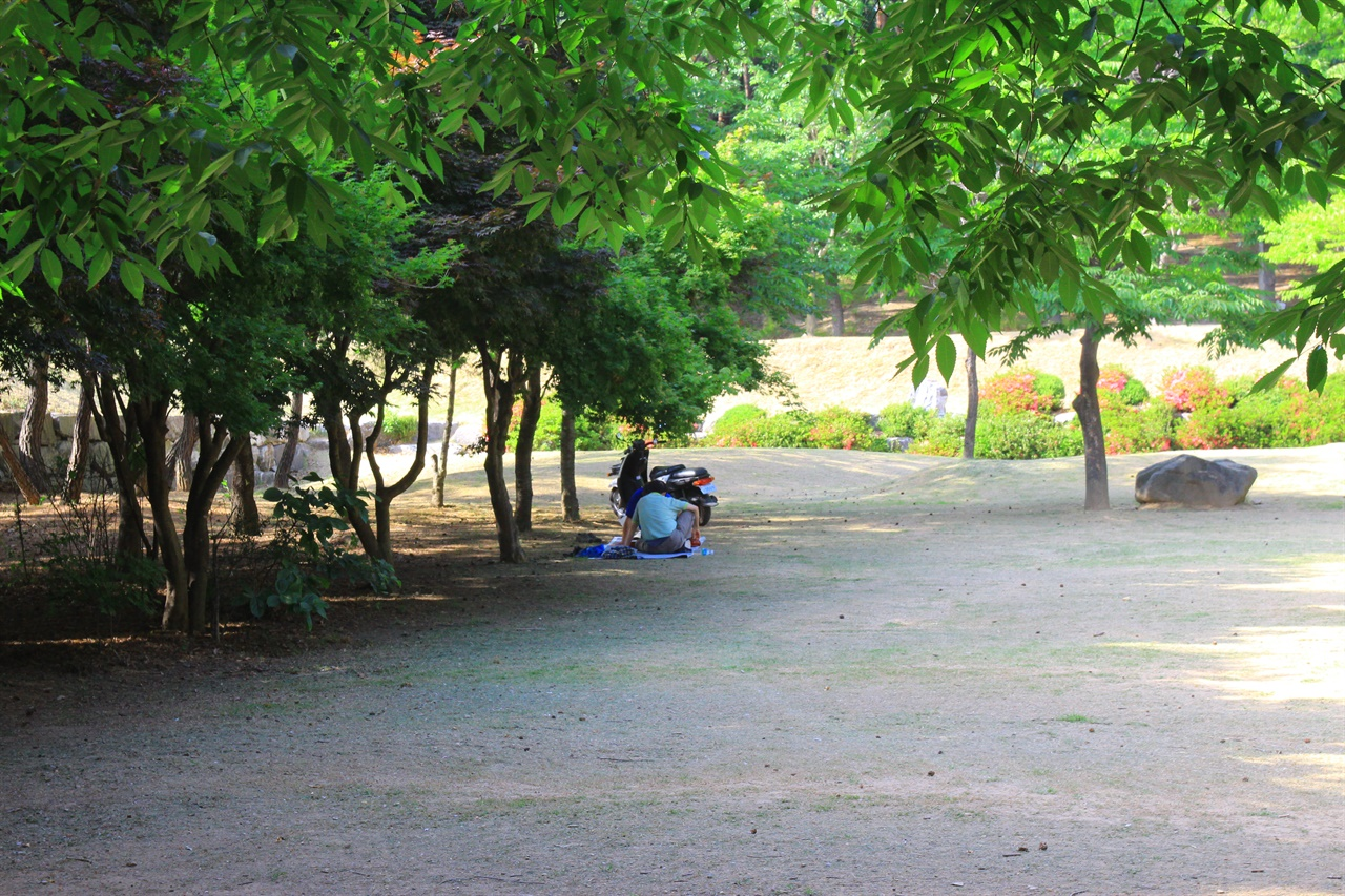 경주 흥무공원 나무 그늘에서 바둑을 두는 모습