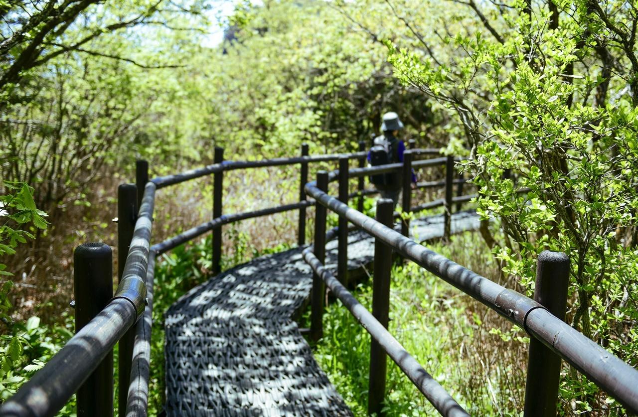 요즘 같은 날에 숲에 파묻힌 채 걸을 수 있는 건 행복이다.