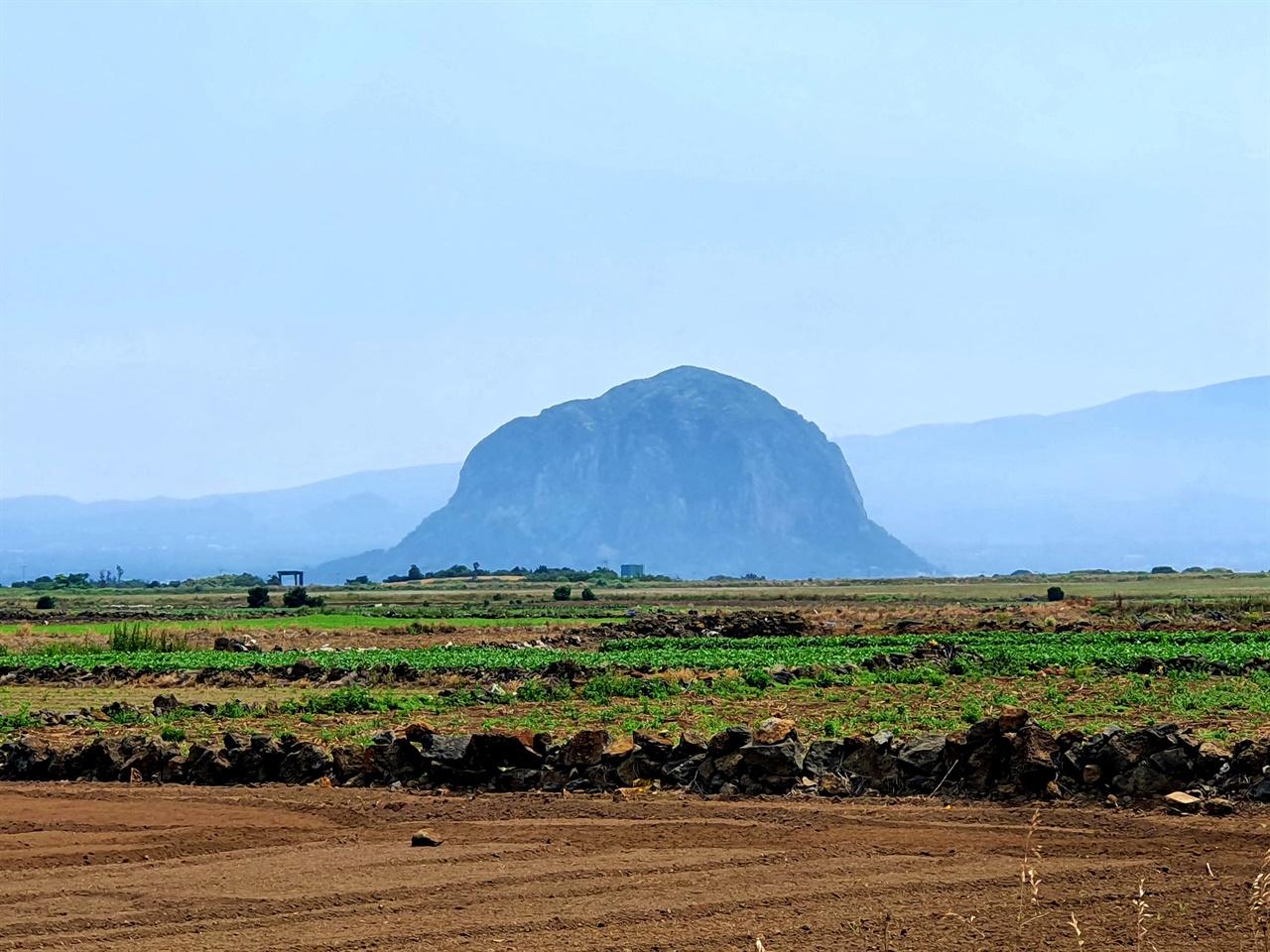 산방산  대정읍 하모리 알뜨르비행장 근처에서 바라본 산방산