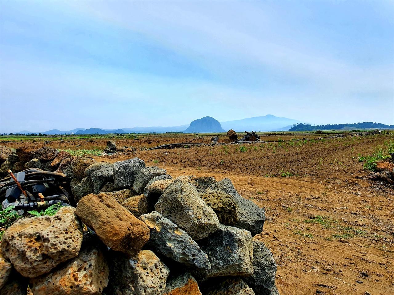 돌담과 산방산 제주 화산암은 제주 사람들과 함께 살아온 공동운명체다.