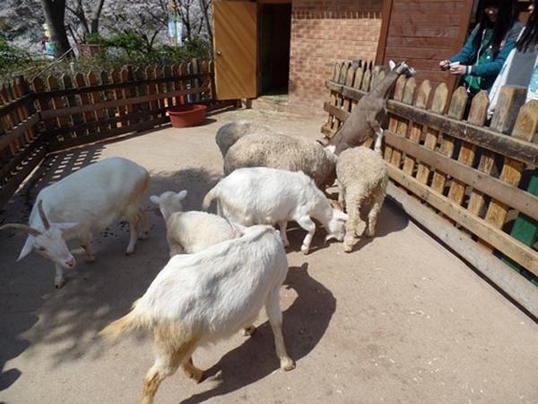 2012년부터 전국의 동물원에 등장하기 시작한 먹이주기 체험. 당시에는 지자체 동물원을 비롯한 모든 동물원에 등장했다.