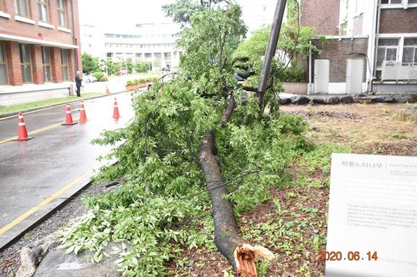 나뭇가지가 떨어진 곳은 차량과 사람들이 빈번히 다니는 길목이라서 하마터면 큰 사고로 이어질 뻔했다