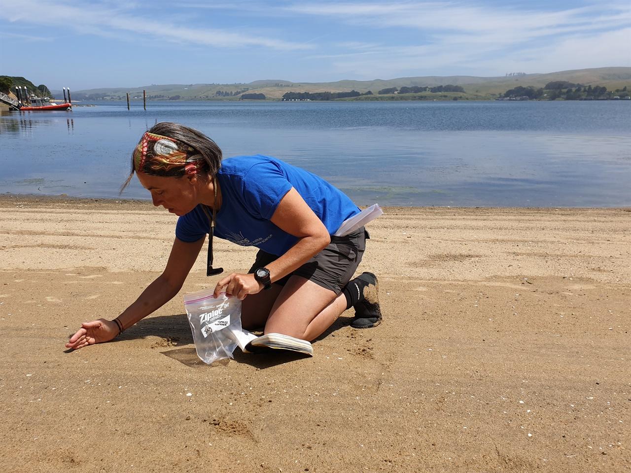 시드니 대학 빌라-콘세호 교수가 미국 캘리포니아 토말레스 해변에서 모래를 연구에 사용될 모래를 채취하고 있다.