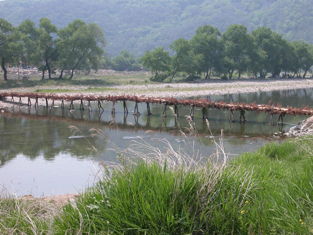 강변의 봄, 갈색으로 말라있는 다리의 섶 녹음이 피어나는 강변의 봄 풍경 속에, 지난 가을 만들어진 판운리 섶다리 모습.