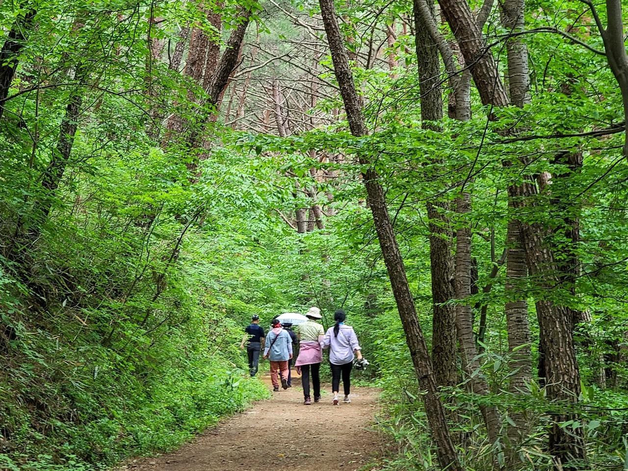 천은사 소나무숲길을 산책하는 남도한바퀴 탑승객들