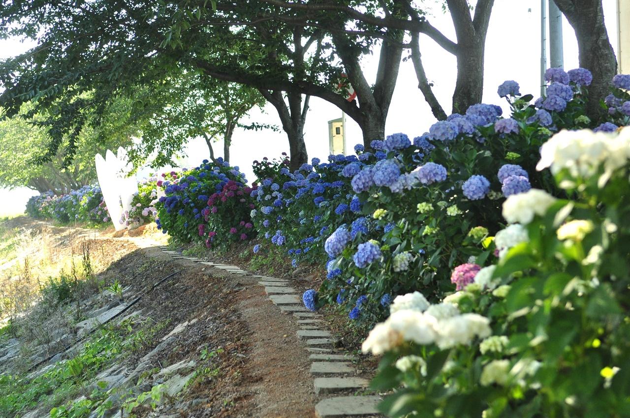 바깥길로 걸어갔다가 되돌아 나올 때는 광도천을 보고 안쪽으로 걸으며 숨어있는 꽃들을 마주한다..
