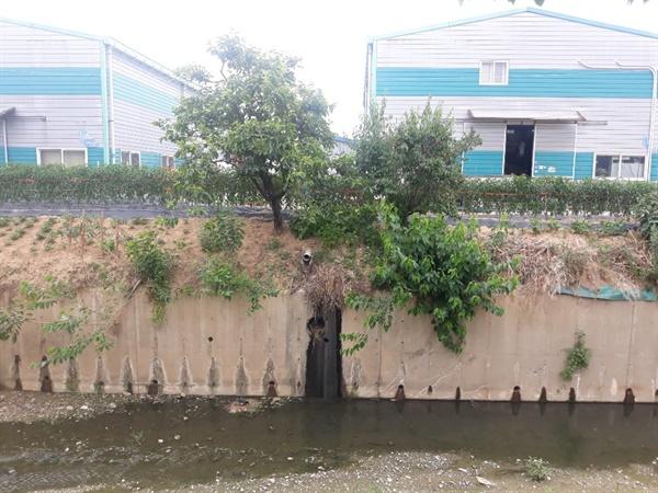 시꺼먼 물 기안천 오염도는 심각했다. 준설토는 육안으로도 오염도가 심해 재활용이 불가능했다.
