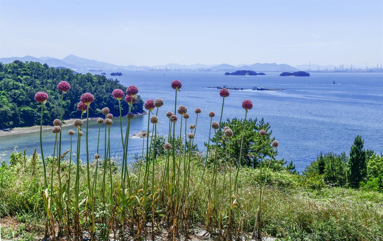 바닷길에서 반기는 들꽃과 들풀은 덤으로 기쁨을 준다.