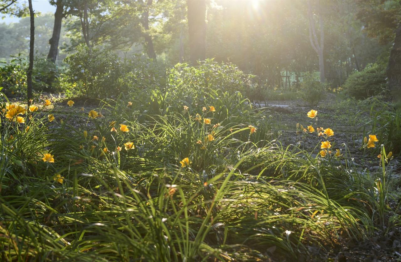 늦은 오후의 햇빛이 그윽하다. 해질 무렵 오래된 숲의 깊은 맛이 마음을 가라앉힌다.